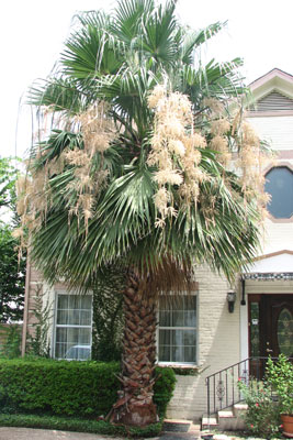 palm-tree-in-summer-houston