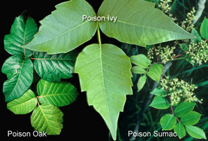 health_poison_plants