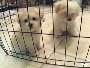 texas_dogs