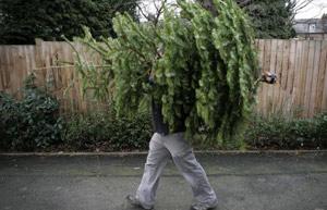houston_tree_recycling
