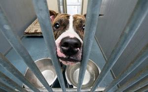us_pet_shelter